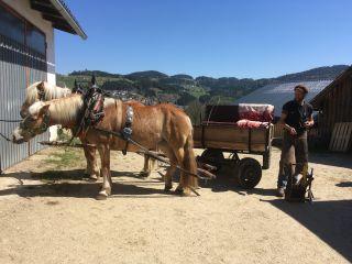 Der Hufschmied kommt mit der Kutsche zur Arbeit- authentisch!